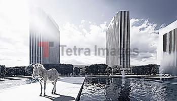Zebra on platform in urban park