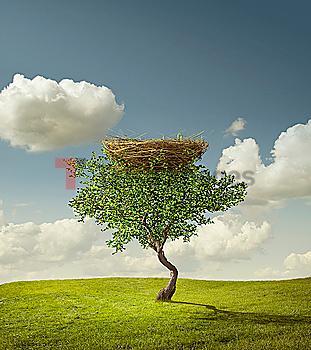 Empty bird´s nest in tree