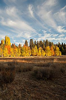 Autumn trees in remote field
