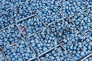 Rows of blueberries in cartons