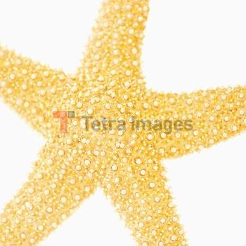 Studio shot of star fish