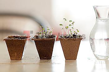 Seedlings near vase of water