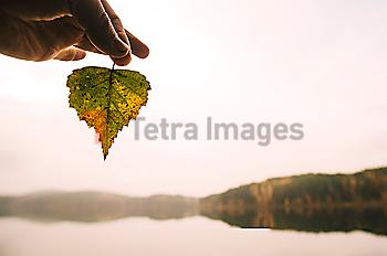 Hand holding autumn leaf at remote lake