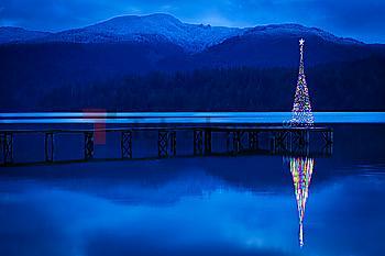 Christmas tree reflecting in lake
