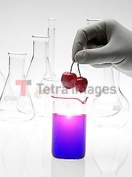 Caucasian scientist placing cherries into purple liquid