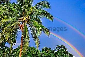 Rainbows over palm trees
