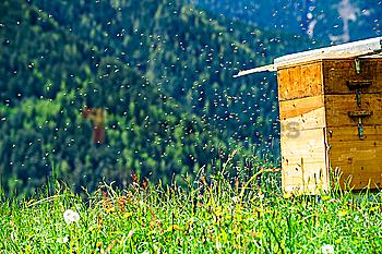 Bees by beehive in Dolomites, Italy
