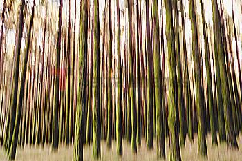 Long exposure of tree trunks in forest