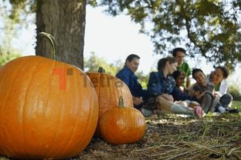Pumpkins with family in background