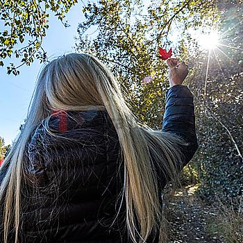 Woman holding autumn leaf up to sun in Bellevue, Idaho, USA