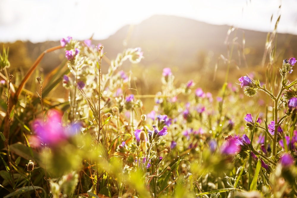 Sunny day on the flowers meadow. Beautiful natural background.