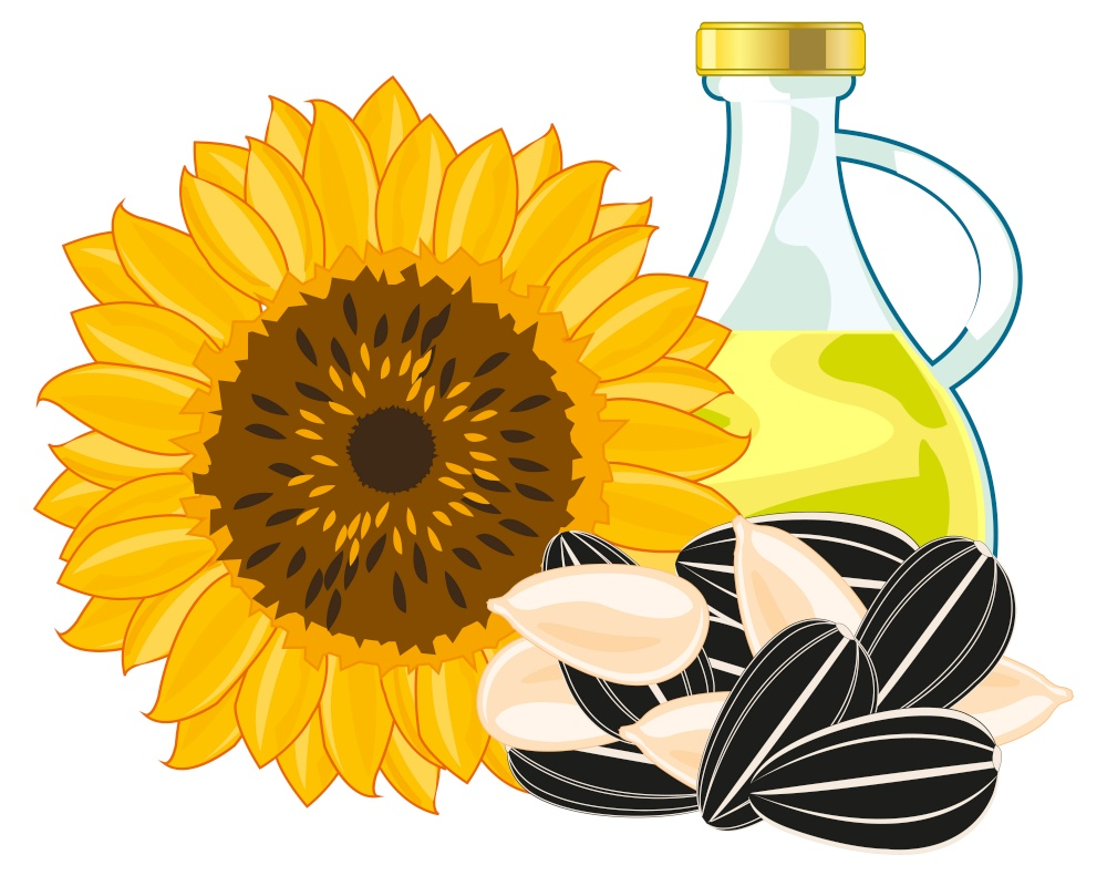 Sunflower and product sunflower butter on white background is insulated. Plant sunflower with seeds and sunflower butter