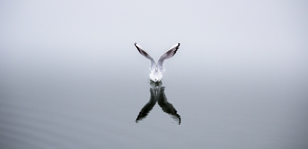Seagul Preparing to Fly