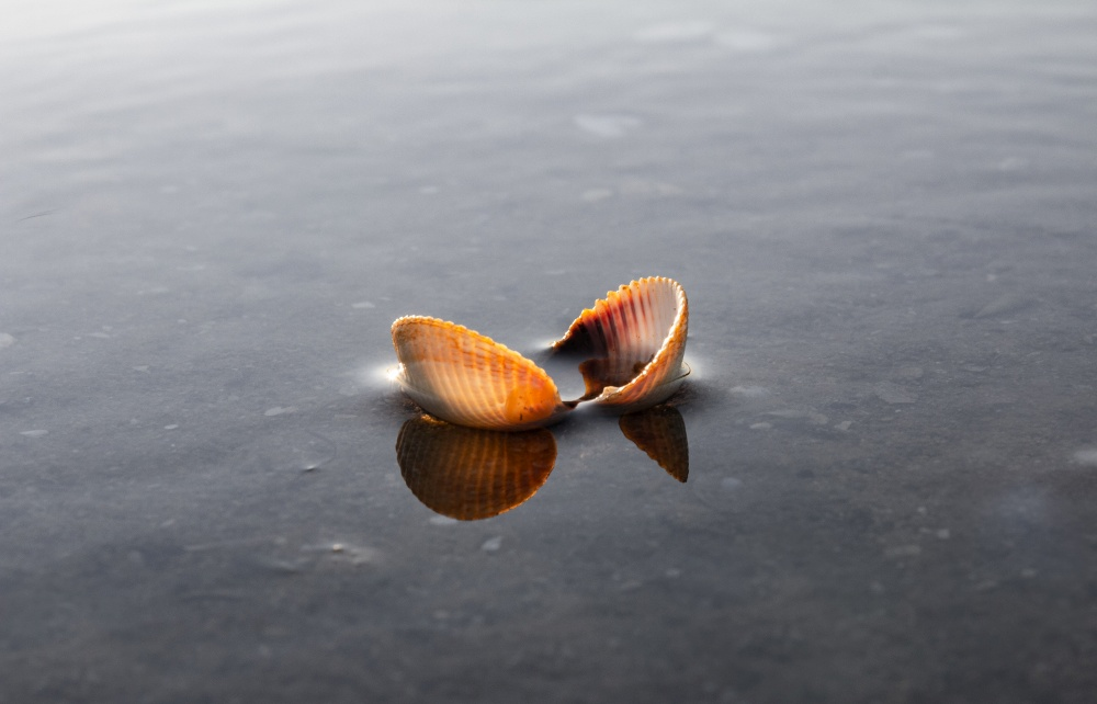 Small Sea shell in shallow water
